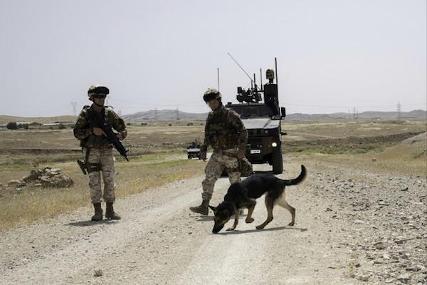 Missione in Iraq:visite veterinarie agli assetti k9 di Mosul