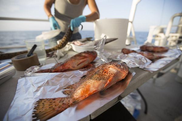 Microplastica anche in pesci ed invertebrati, lo conferma una ricerca Greenpeace/UNIVPM/ISMAR-CNR