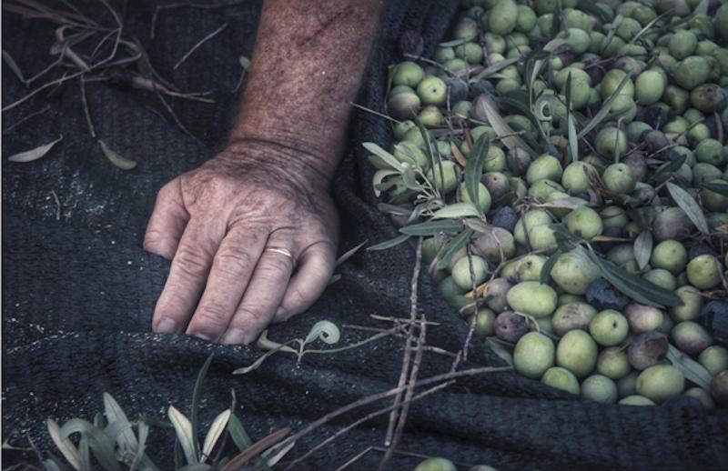 """""""Buono da Scattare"""" promuove l'arte della fotografia e la tradizione dell'olio."""