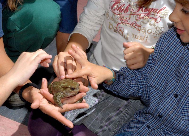 Domeniche ecologiche: al Bioparco sconti e incontri ravvicinati con gli animali