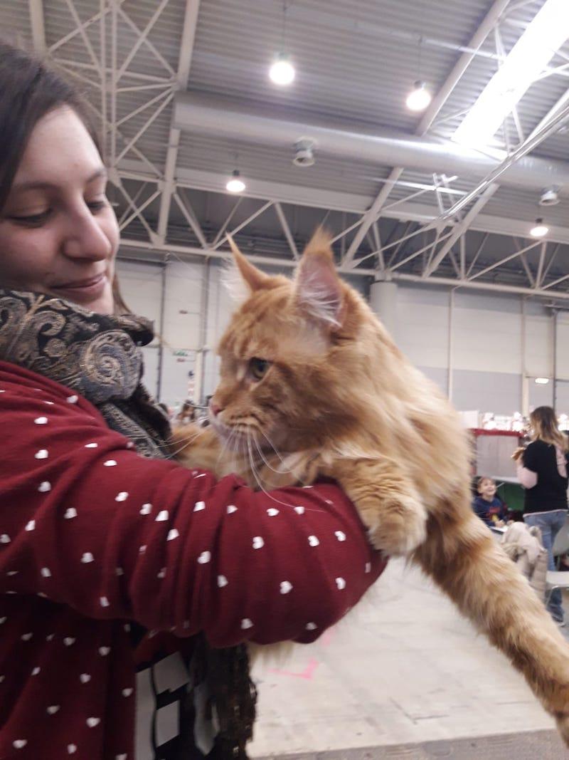 Mi-ci-porti? La XIX edizione del SuperCat Show chiude in bellezza…felina
