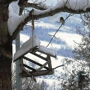 Arriva il freddo: ecco i consigli per aiutare gli uccellini in difficolta'