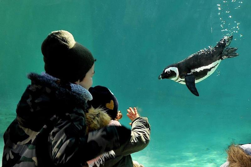 Bioparco: WWF per la difesa degli ecosistemi marini