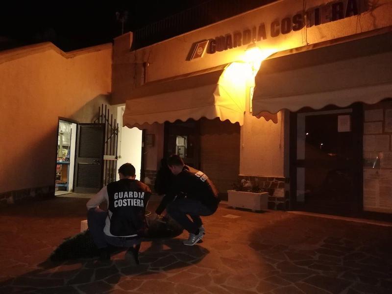 Sequestrati più di 3500 ricci di mare tra Santa Marinella e Tarquinia