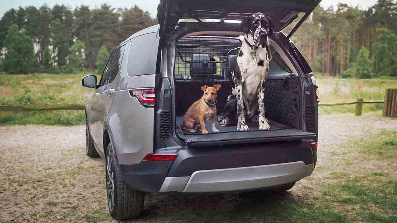 I 5 consigli di Dr.Dog per far viaggiare sereno e protetto il nostro cane