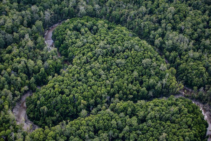 Report Greenpeace: la produzione industriale di materie prime agricole si sta mangiando le foreste del Pianeta