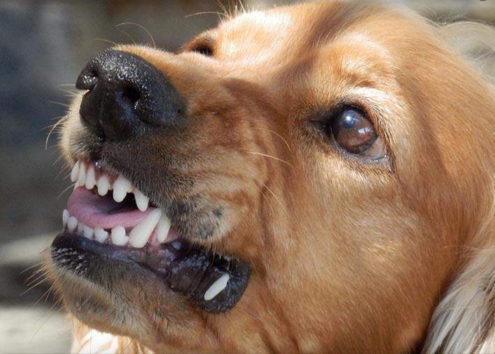Animali: i cani obesi sono più irritabili, lo rivela una ricerca inglese