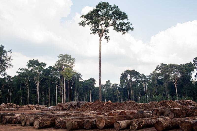 Greenpeace: piano UE contro deforestazione non affronta i costi ambientali e umani delle politiche commerciali e agricole