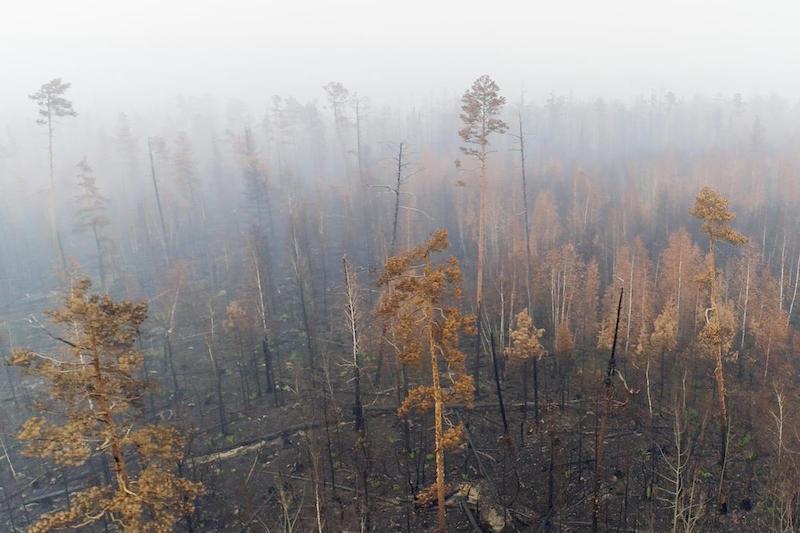 Greenpeace : in Siberia è emergenza climatica. Bruciata un'area grande come Lombardia e Piemonte messi insieme