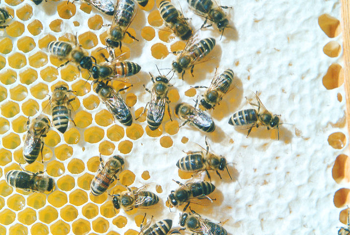 Pesticidi, Greenpeace: «Bene lo stop UE all'insetticida Thiacloprid»