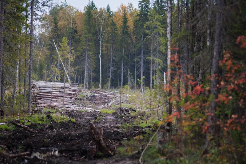 Greenpeace: dopo 20 anni di campagne, protetta in Russia una foresta grande come il Belgio