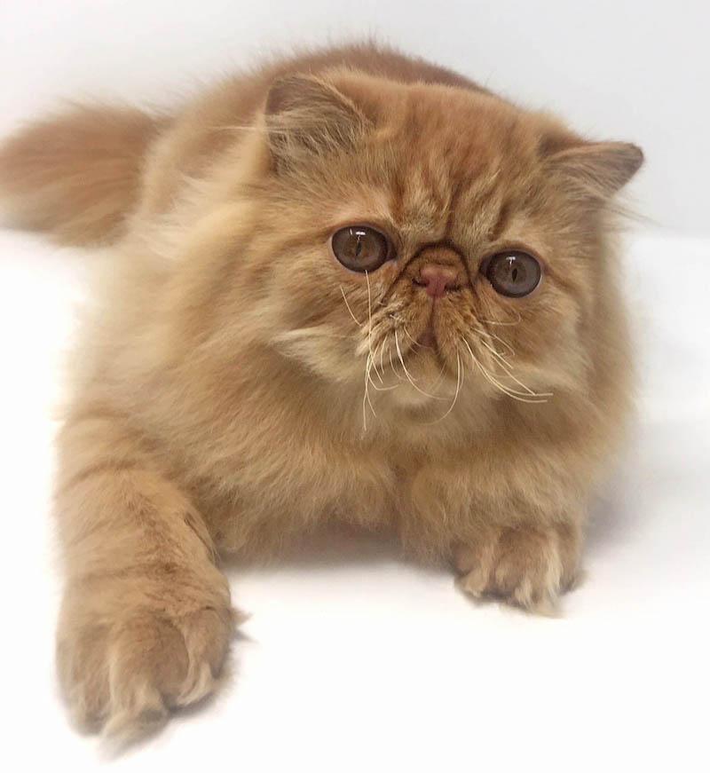 Gatti anti-allergia al SuperCat Show
