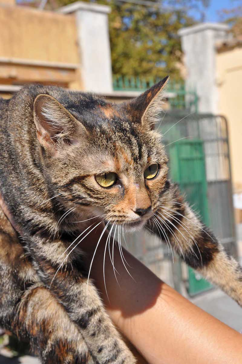 Gatti anti-allergia al SuperCat Show