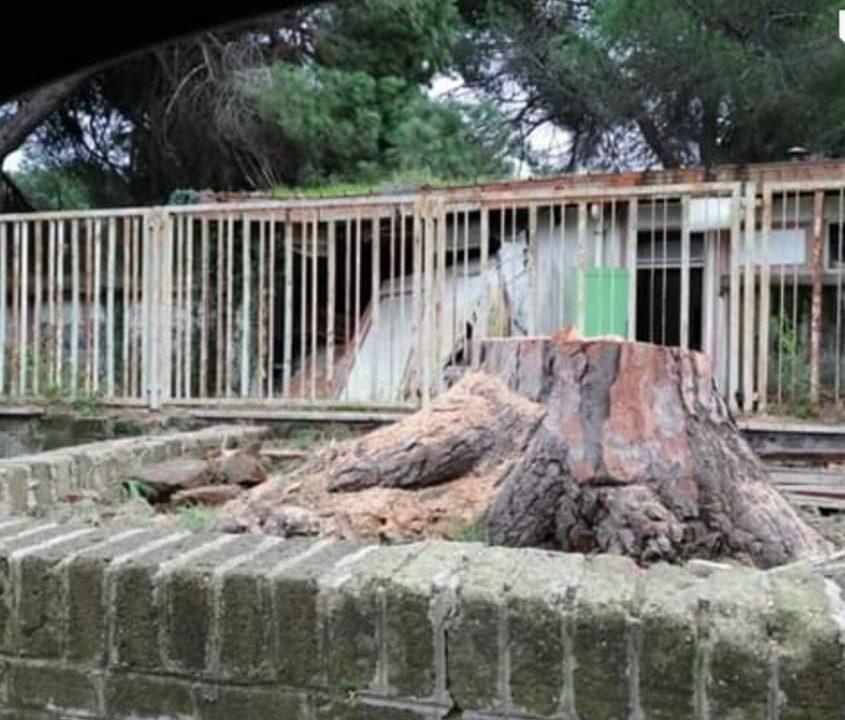 Sinistra Italiana X Municipio: Giornata Nazionale degli alberi, con quale faccia la Giunta Di Pillo e la maggioranza celebreranno l'appuntamento?