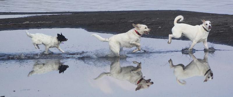 Dog Manager: il primo corso a tema targato Baubeach® da febbraio a giugno 2020