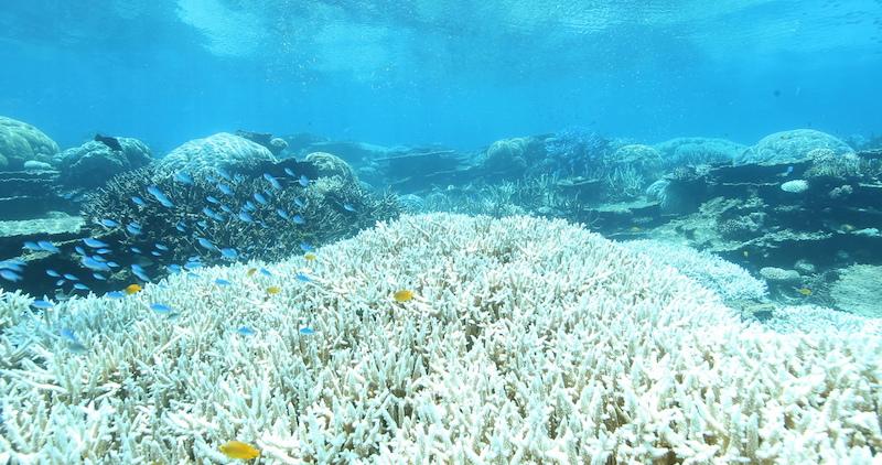 Greenpeace: Australia, nuovo sbiancamento massiccio della Barriera Corallina