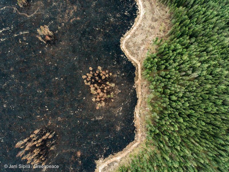 Giornata internazionale delle foreste. Greenpeace: Non si azzerano le emissioni piantando alberi