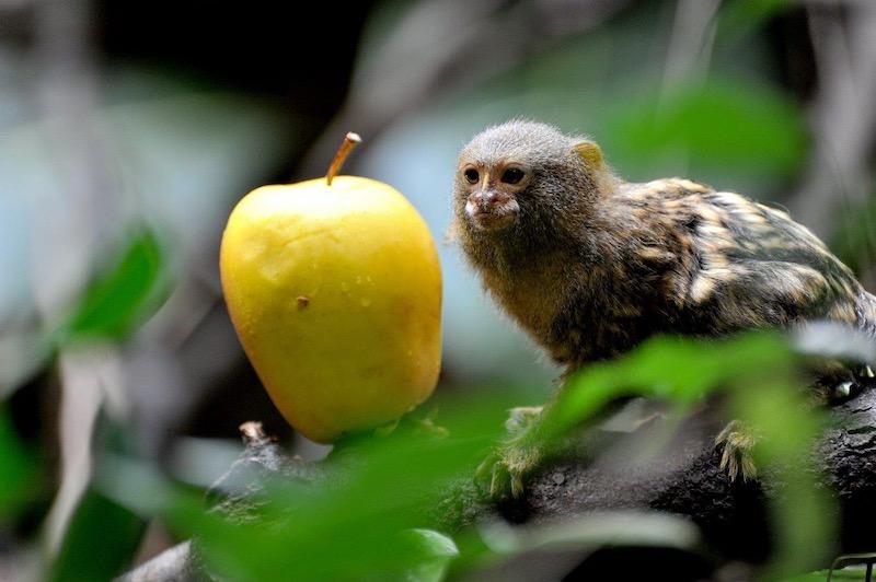 Domenica 8 marzo al Bioparco la Giornata mondiale della Fauna selvatica