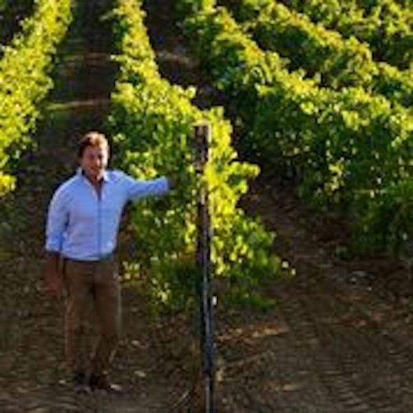 Il Consorzio di Tutela Vini Doc Sicilia e Assovini Sicilia costituiscono la  Fondazione SOStain Sicilia  per promuovere la sviluppo sostenibile della vitivinicoltura siciliana