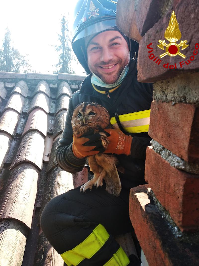 Vigili del Fuoco – Schio (VI), Salvato un Allocco rimasto incastrato nella canna fumaria di una abitazione