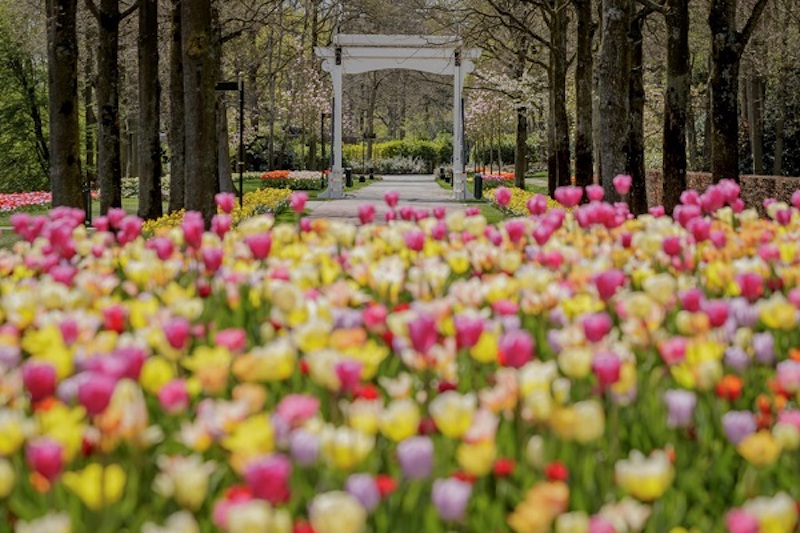 """Keukenhof opens virtually: """"We bring the tulips to your home!"""""""