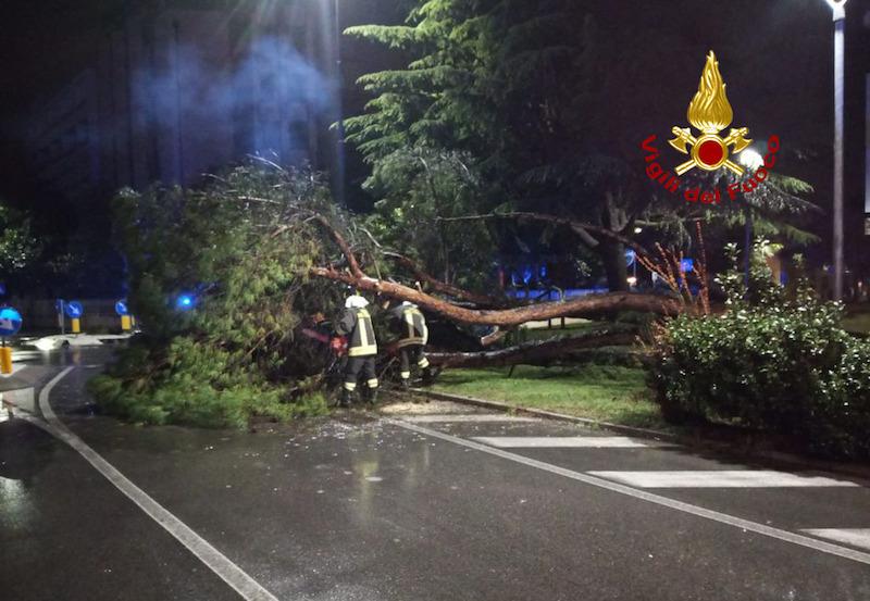 Vigili del Fuoco – Abano Terme (PD), Maltempo accompagnato da violente raffiche di vento fanno cadere un Pino Marittimo