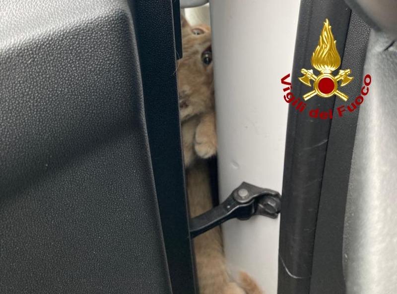 Vigile del Fuoco – Torri di Quartesolo (VI), Disavventura a lieto fine per un gattino intrappolato tra passaruota e portiera di un auto