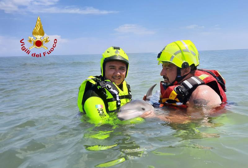 """Vigili del Fuoco – Rosolina Mare (RO), Deceduto nonostante i soccorsi il cucciolo di delfino spiaggiatosi stamattina nel pressi dei bagni """"Al Granso"""""""