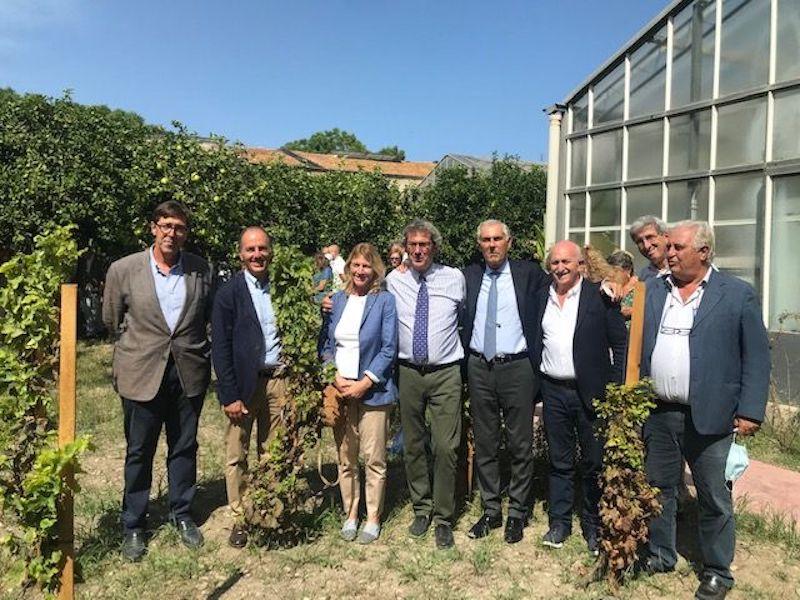 """La Sicilia del vino rende omaggio a Diego Planeta:la """"Vigna del Gallo"""" porterà il suo nome"""